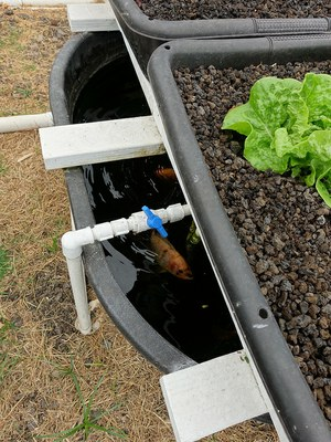 Aquaponics by Scot Nelson is licensed by CC BY