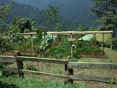 Organic Farm Area Ecuador