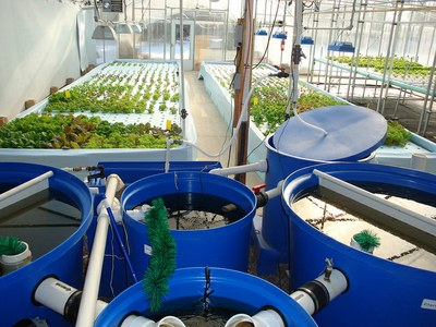 Nelson and Pade Clear Flow Aquaponics System by Kate Field is licensed under CC BY-SA