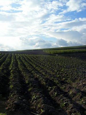"""""""Agriculture in Ecuador"""" by Global Water Forum is licensed under CC BY 2.0"""