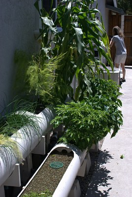 Aquaponics by Nicolás Boullosa is licensed by CC BY